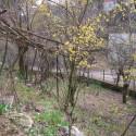 Kapullu Küpler Mahallesi Satılık Müstakil 2 Katlı Bahçeli Ev
